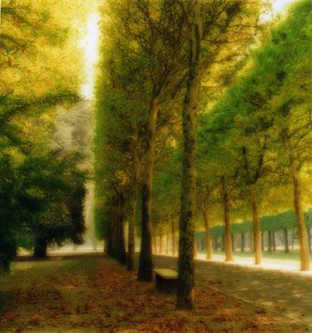 Parc de Sceaux, France, 1997 (10-97-7c-10), 19 x 19 and 28 x 28 inch Chromogenic print, Edition of 15 per size