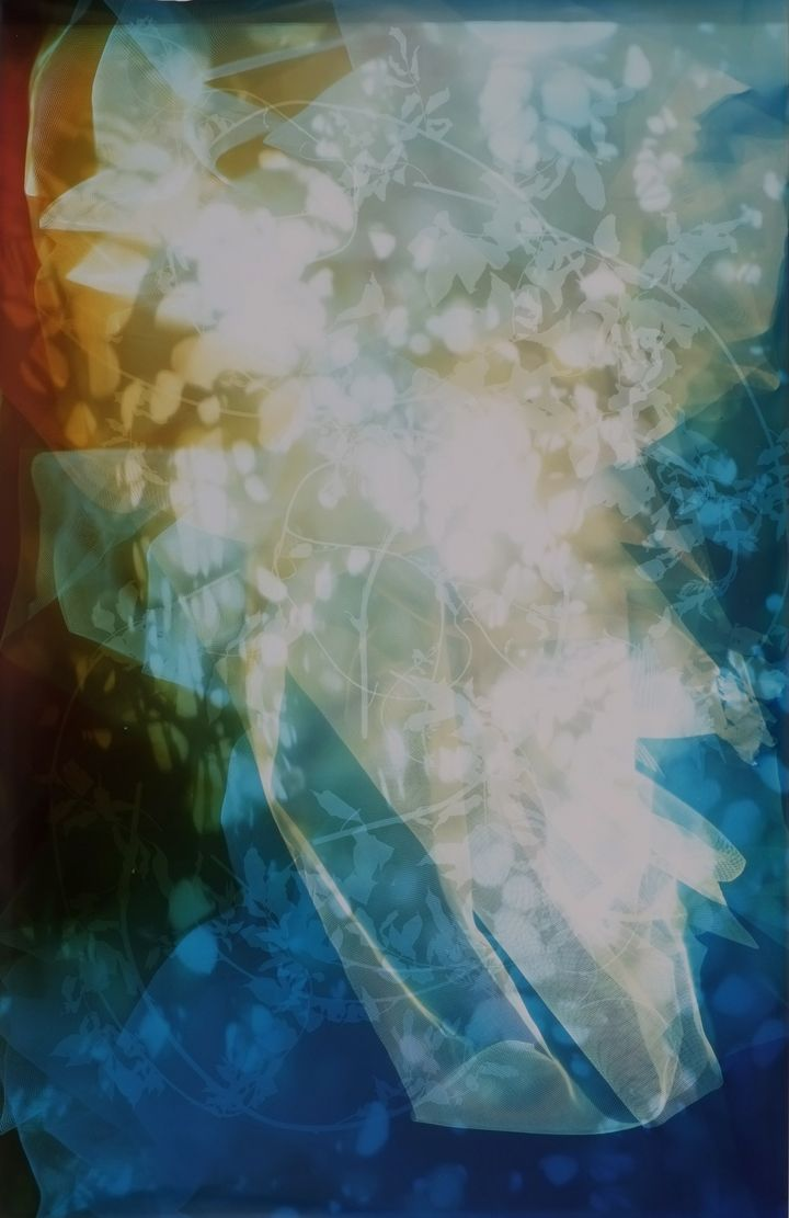 Sun Room Canopy Debris I, 2016, 61 x 40 inch unique chromogenic print