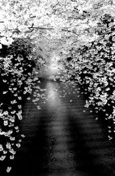 Untitled #1534 (from Kawa = Flow), 2008, 9 x 6 inch Gelatin Silver Print, Signed, titled, dated, editioned and stamped on verso, Edition of 20