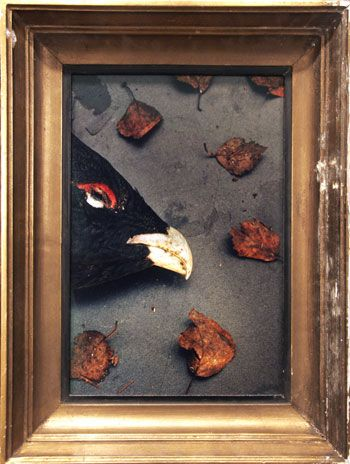 Homenokka, 25.2 x 19.29 inch Chromogenic Print, edition of 20