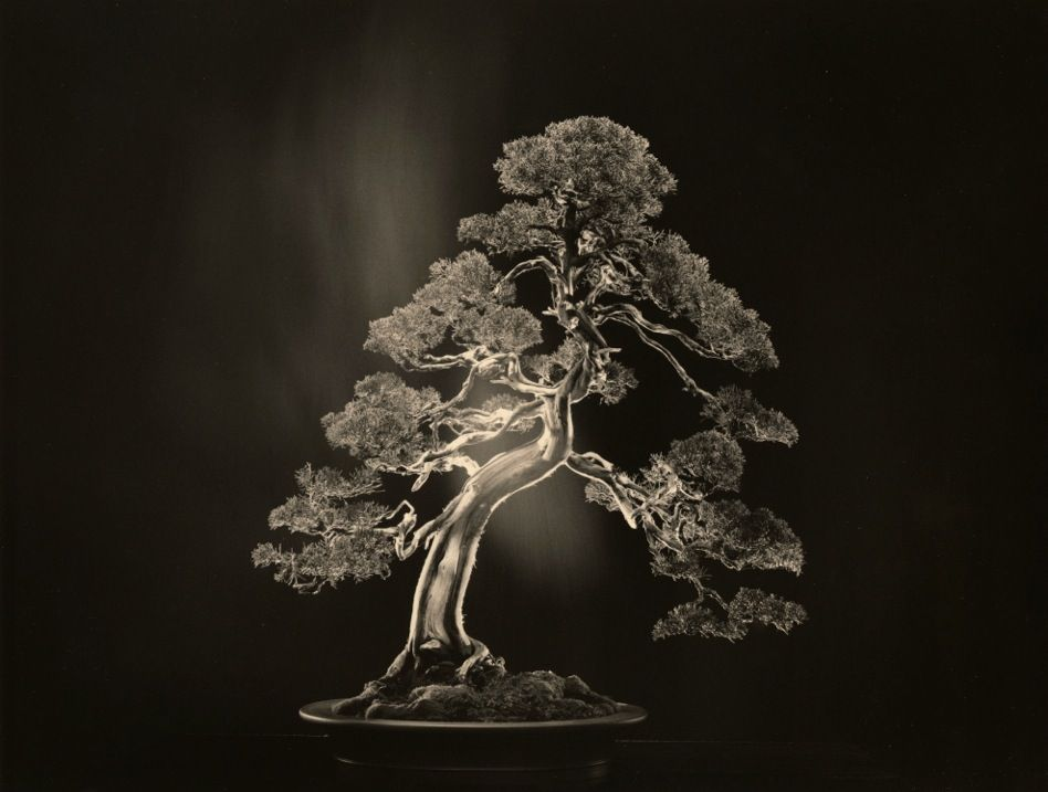 #4000from the seriesBonsai, 2018, 11 x 14 inch gelatin silver print