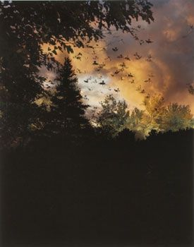 """Field at Dusk #2"", 2008, 20 x 16 inch Chromogenic Print, Edition of 7"