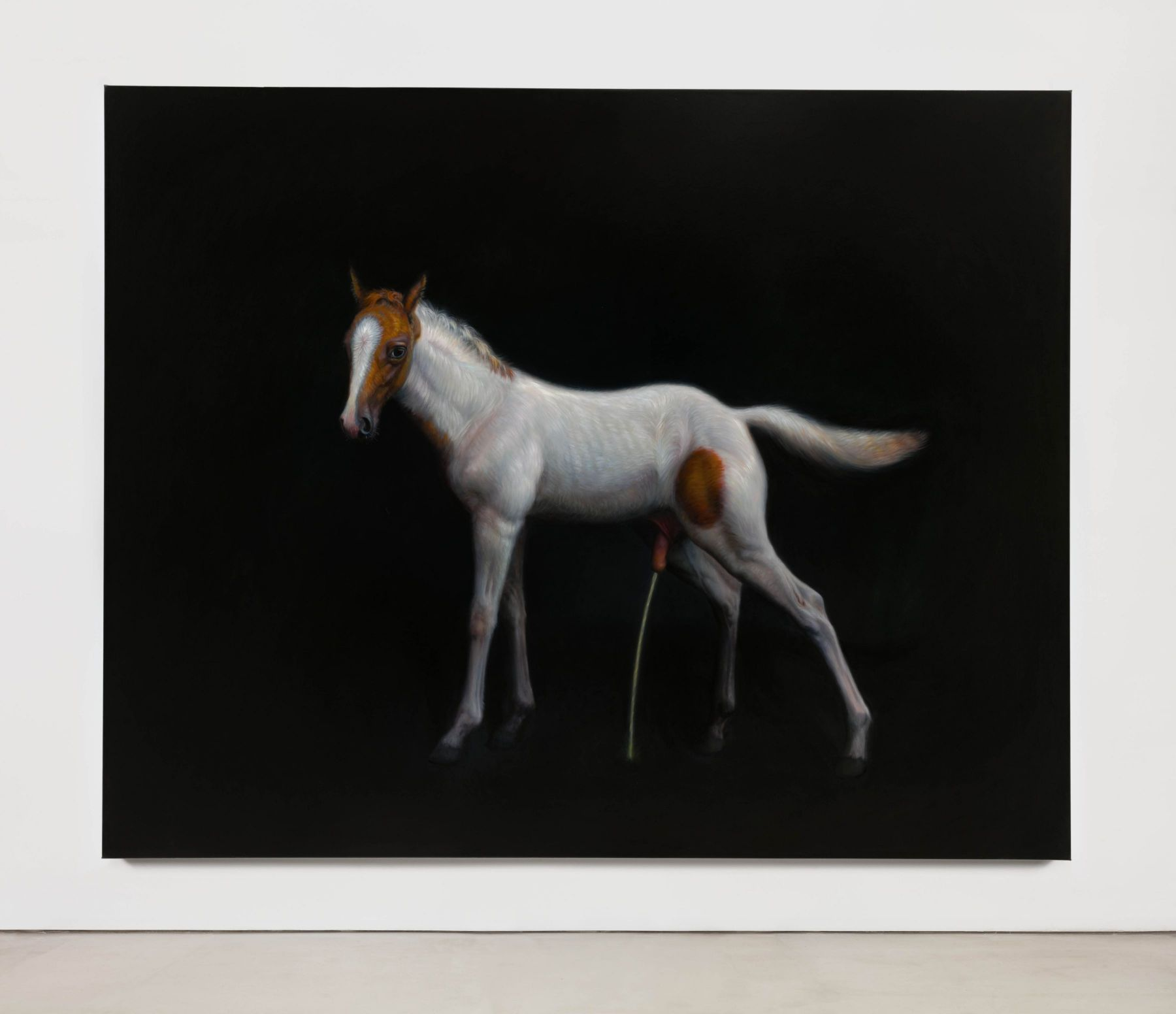TM Davy horse (xx)