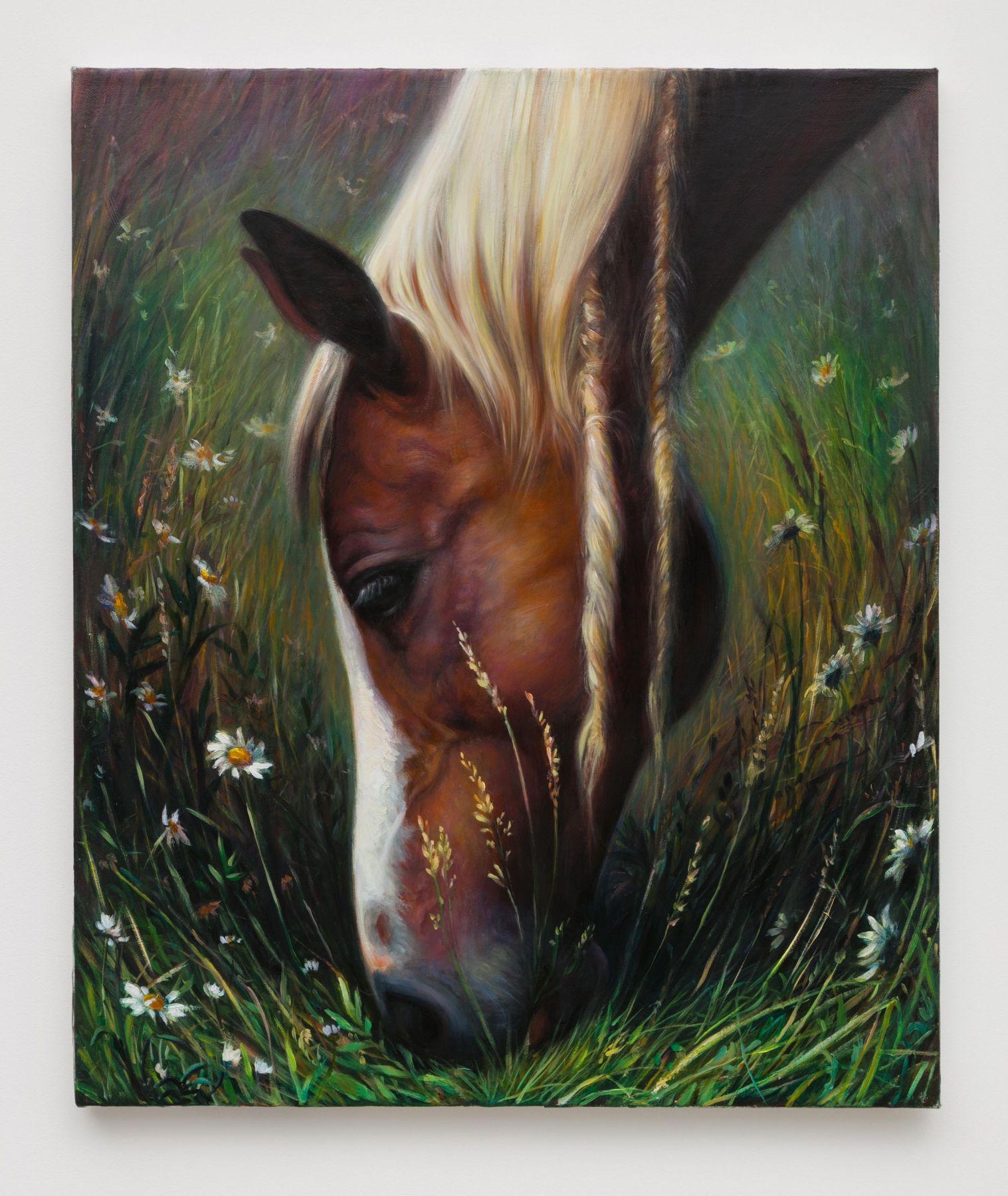 TM Davy horse (xxx)