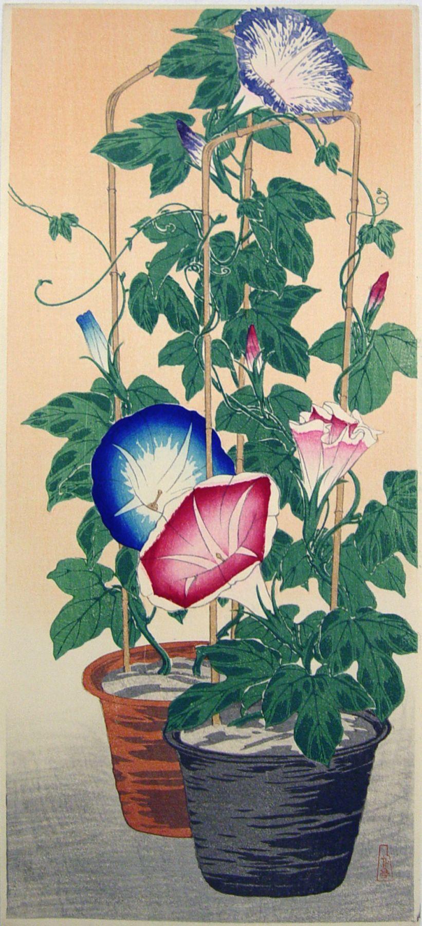 Takahashi Shōtei (1871-1945), Morning glories