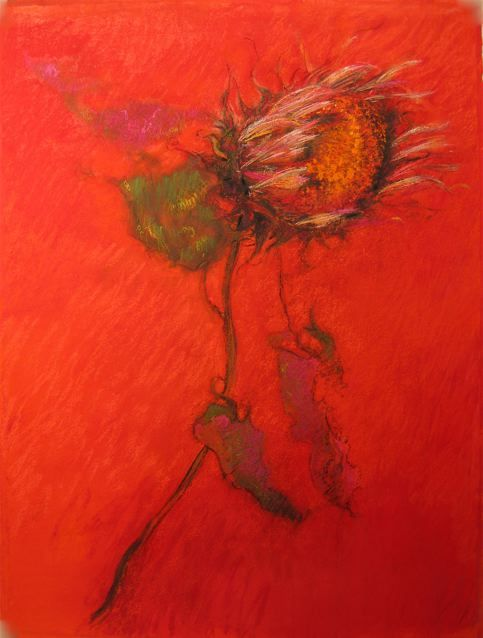 Sunflower on Crimson No. 1, 2008, Pastel on paper