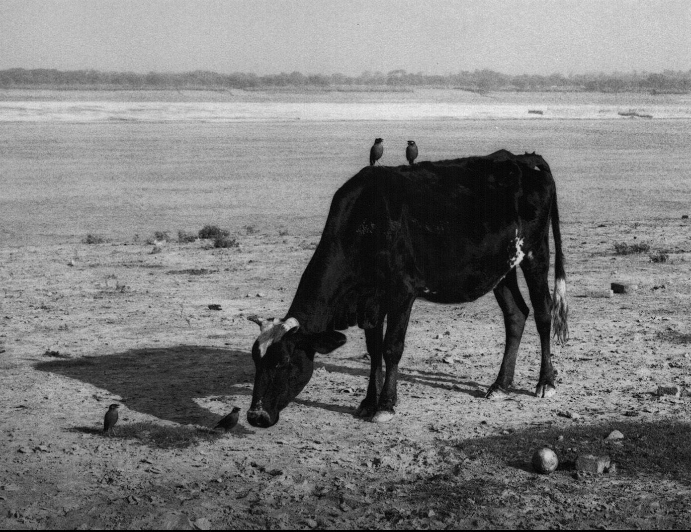 Pentti Sammallahti (b. 1950, Helsinki), Varanasi, India, 1999