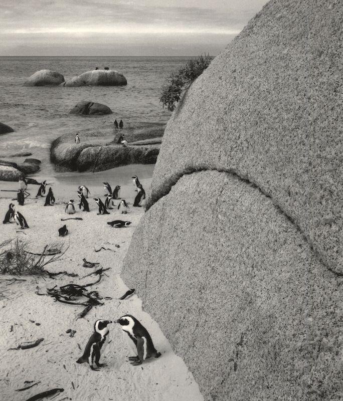 Bolders Beach, South Africa