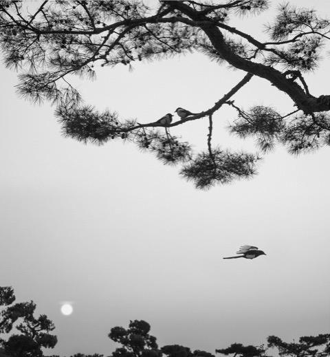 Pentti Sammallahti (b. 1950, Helsinki), Seoul, South Korea (three birds), 2016
