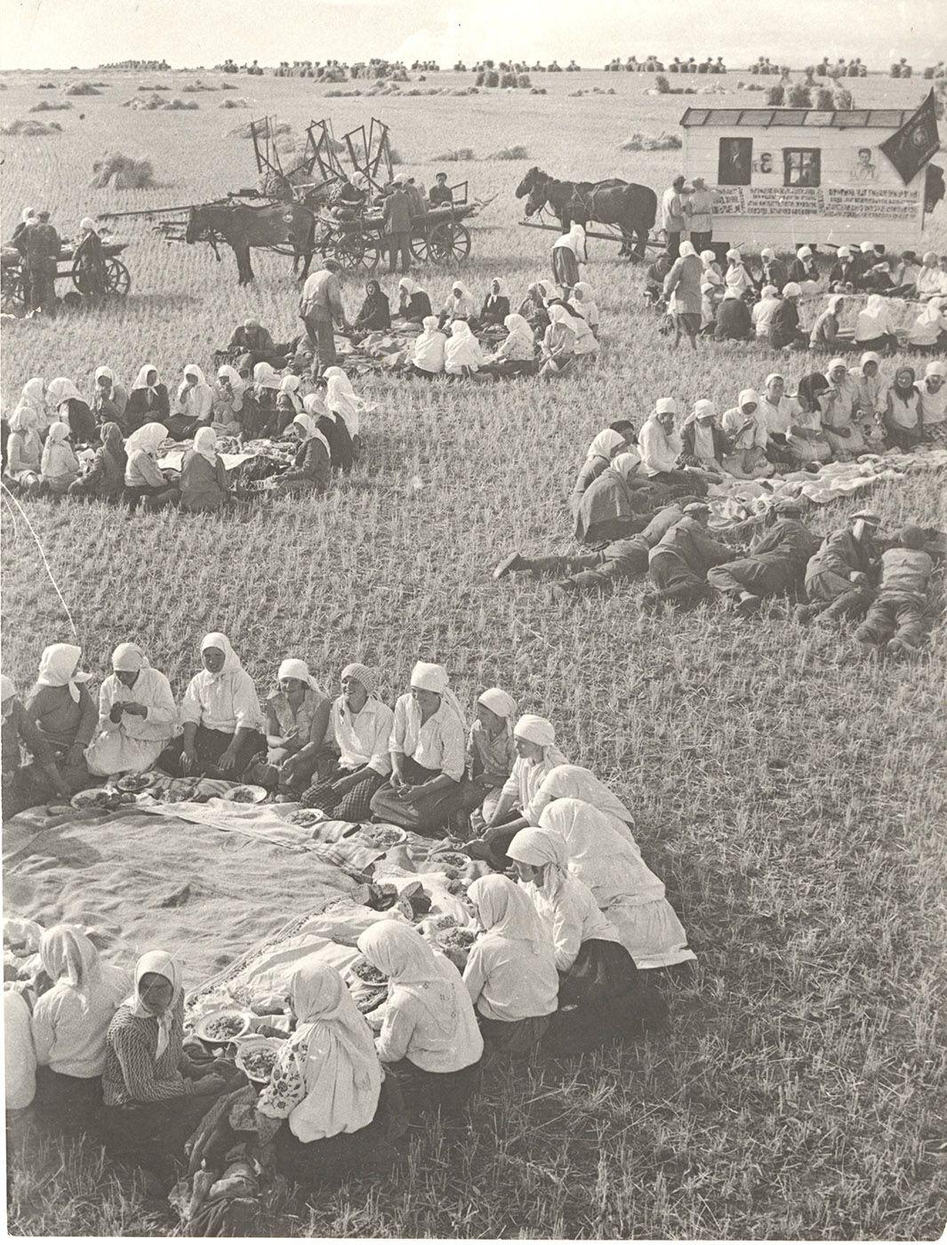 Lunch in the Fields