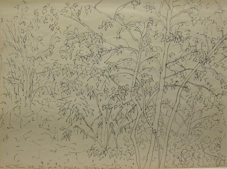 Flowers c.1985 ink drawing on newsprint