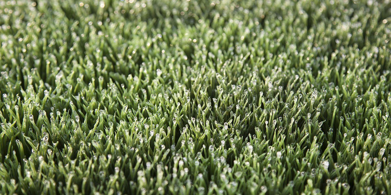 Rain Harris Vision Field