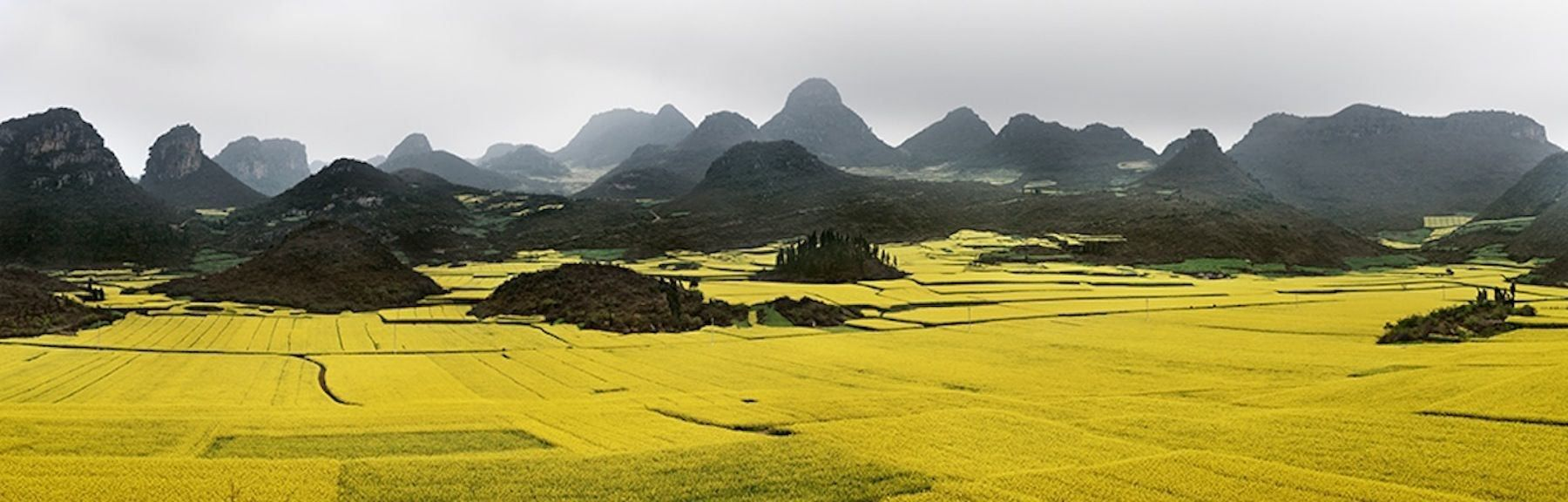 Canola Fields #2, Luoping, Yunnan Province, China, 2011, chromogenic color print,30.8 x 96 inches/78.2 x 243.8 cm
