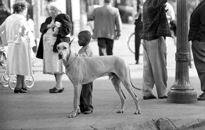 Black Boy & Great Dane, Bronx, New York, 1964, Silver Gelatin Photograph