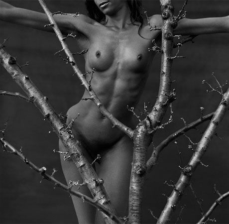 Cerezo (Cherry Tree), Switzerland, 2007, 11 x 14 Silver Gelatin Photograph