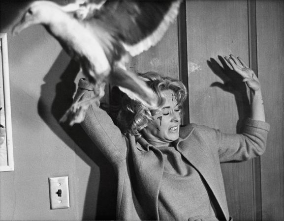 """""""The Birds,"""" Tippi Hedren (attacked by seagull), 1963, 11 x 14 Vintage Silver Gelatin Photograph"""