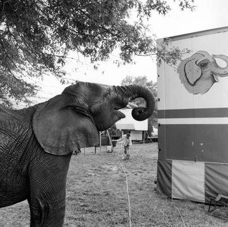 Orange County Fair, Middleton, New York, 1989