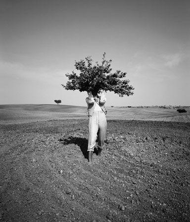 Tree Man, 1992