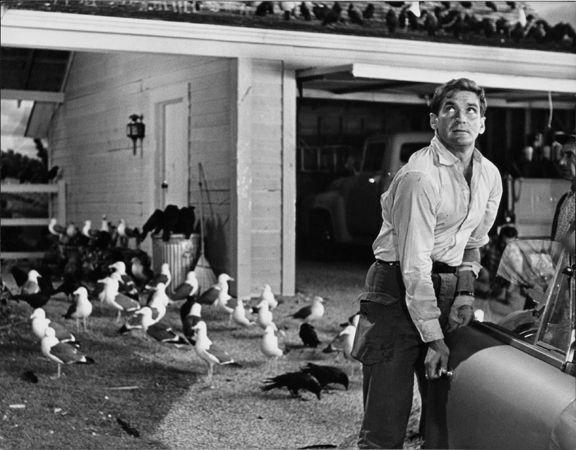 """The Birds,"" Rod Taylor, 1963, 11 x 14 Vintage Silver Gelatin Photograph"
