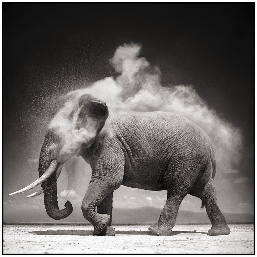 Nick Brandt Elephant with Exploding Dust, Amboseli, 2004