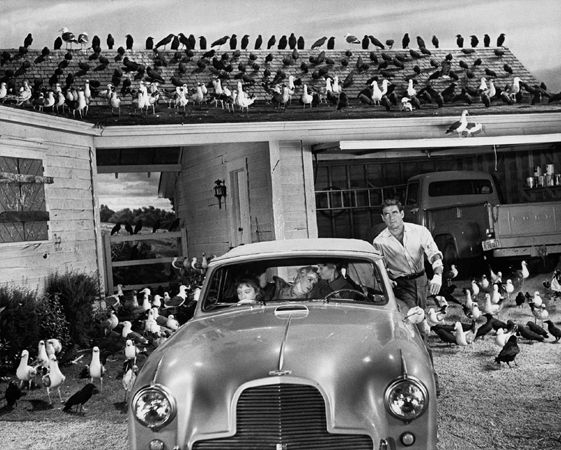 """""""The Birds,"""" Rod Taylor (Tippi Hedren, Jessica Tandy, and Veronica Cartwright in car), 1963, 16 x 20 Archival Pigment Print, Ed. 10"""
