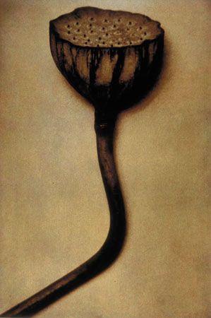 Lotus One, 1998, 19-1/4 x 13 Fresson Print, Ed. 15
