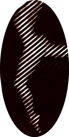 Ova, Untitled #0503790, 40 x 21 Silver Gelatin Photograph, Copper, and Plexiglass, Ed. 7