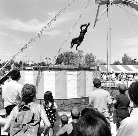Orange County Fair (Diving Horse), Middleton, New York, 1991