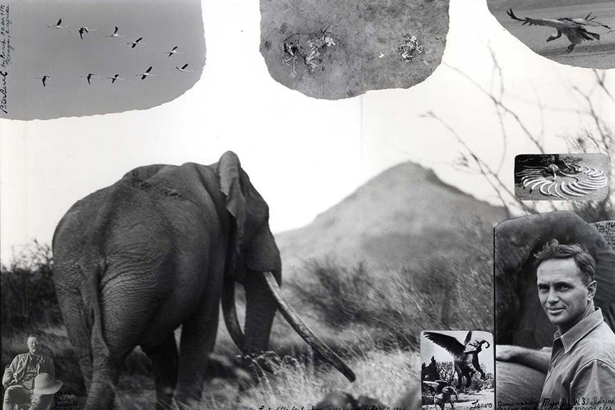 The Last of the Big Tuskers (c. 148 lb. per side), 1968/2002