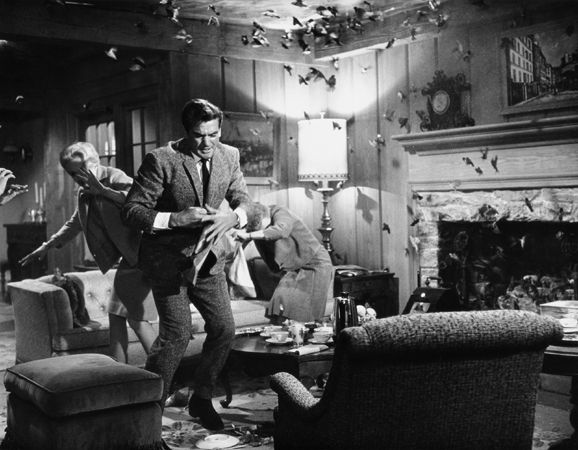 """""""The Birds,"""" Tippi Hedren and Rod Taylor (sparrow attack in living room), 1963, 11 x 14 Vintage Silver Gelatin Photograph"""