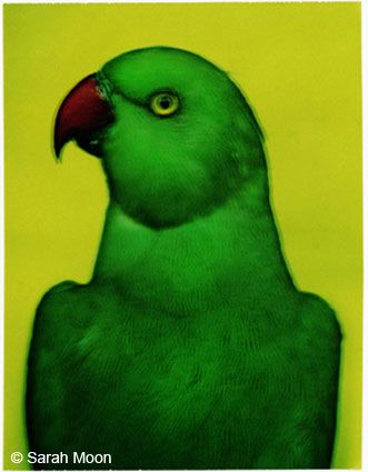 L'oiseau 2, 2000, 29-1/8 x 22-1/2 Color Carbon Photograph, Ed. 15