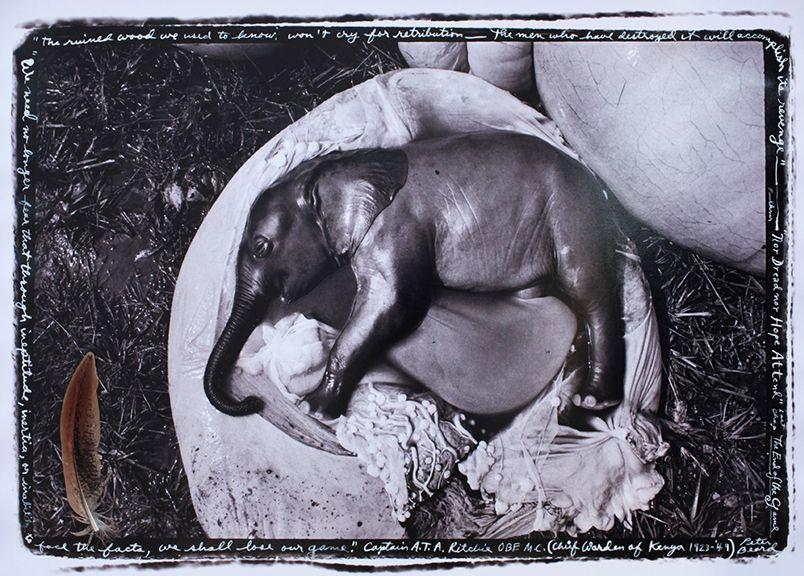 """Elephant Embryo, Uganda, """"The ruined wood...,"""" 1966"""