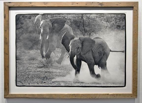 Running Elephants, ca. 1960's