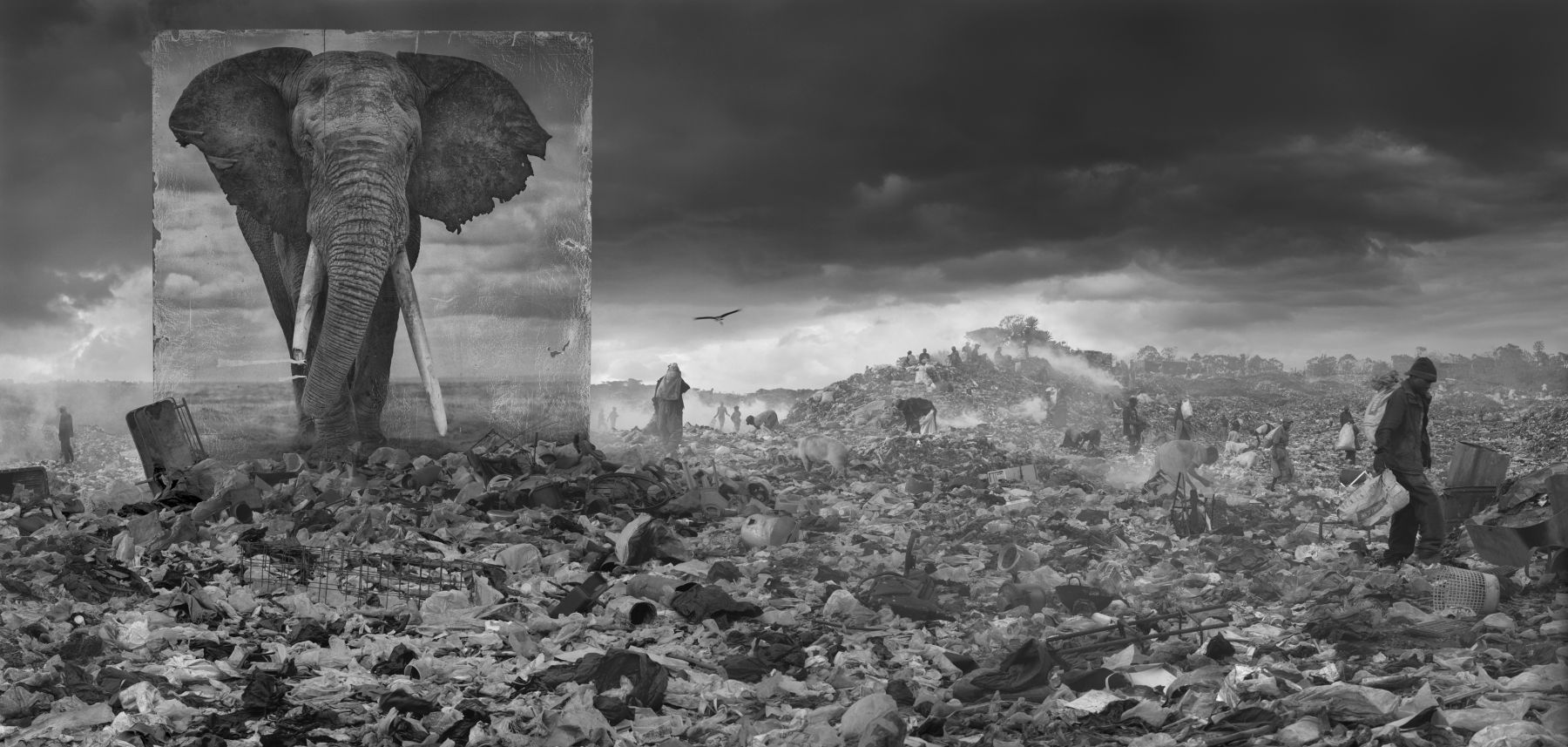Nick Brandt Wasteland with Elephant, 2015