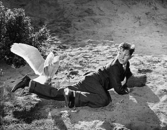 """""""The Birds,"""" Young Actor Attacked by Seagull, 1963, 11 x 14 Vintage Silver Gelatin Photograph"""