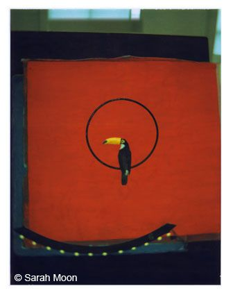 Le Toucan, 1998, 29-1/8 x 22-1/2 Color Carbon Photograph, Ed. 15