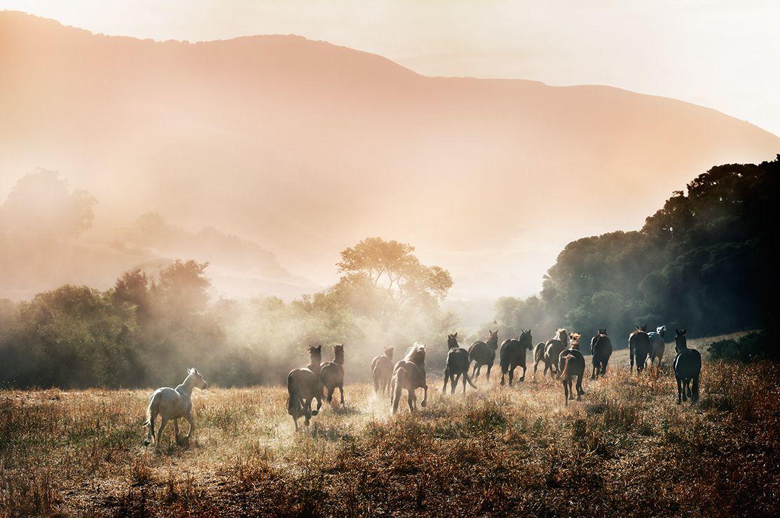HORSES IN PARADISE, Archival Pigment Print