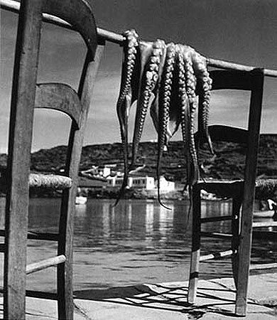 Octopus, Korfu, Greece, 1938, 11 x 14 Silver Gelatin Photograph
