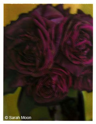 Les roses, 1998, 29-1/8 x 22-1/2 Color Carbon Photograph, Ed. 15