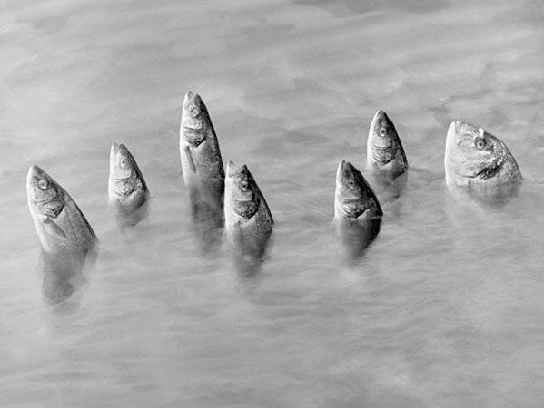 Imagen Mistica (Mystical Image), Switzerland, 2005, 11 x 14 Silver Gelatin Photograph