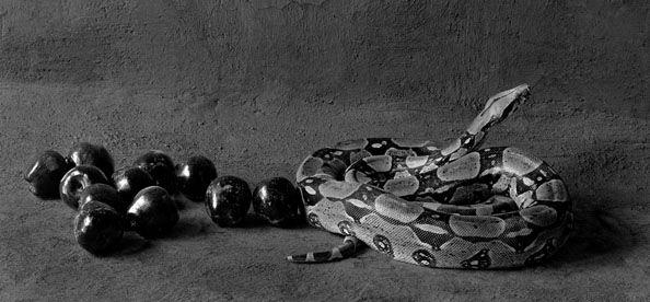 Pecado Original, 11 x 14 Silver Gelatin Photograph