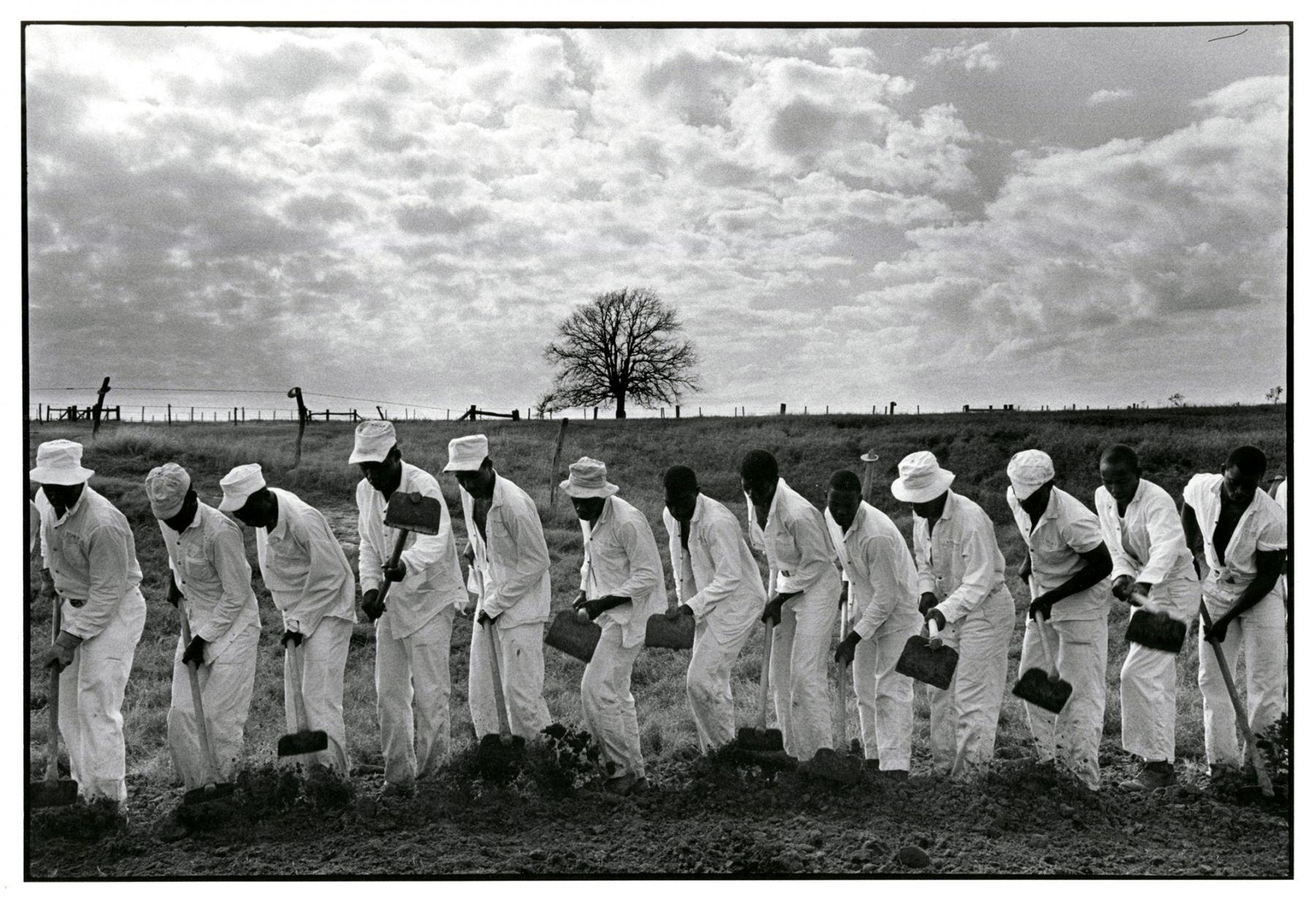 Copyright Danny Lyon / Magnum Photos, The Line, Gerguson Prison Farm, from Conversations with the Dead, 1968