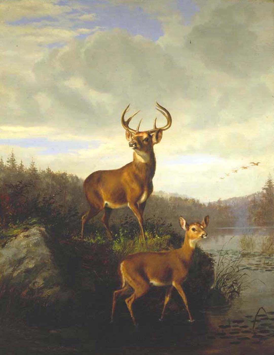 Arthur Fitzwilliam Tait (1819-1905), Buck and Doe, 1878