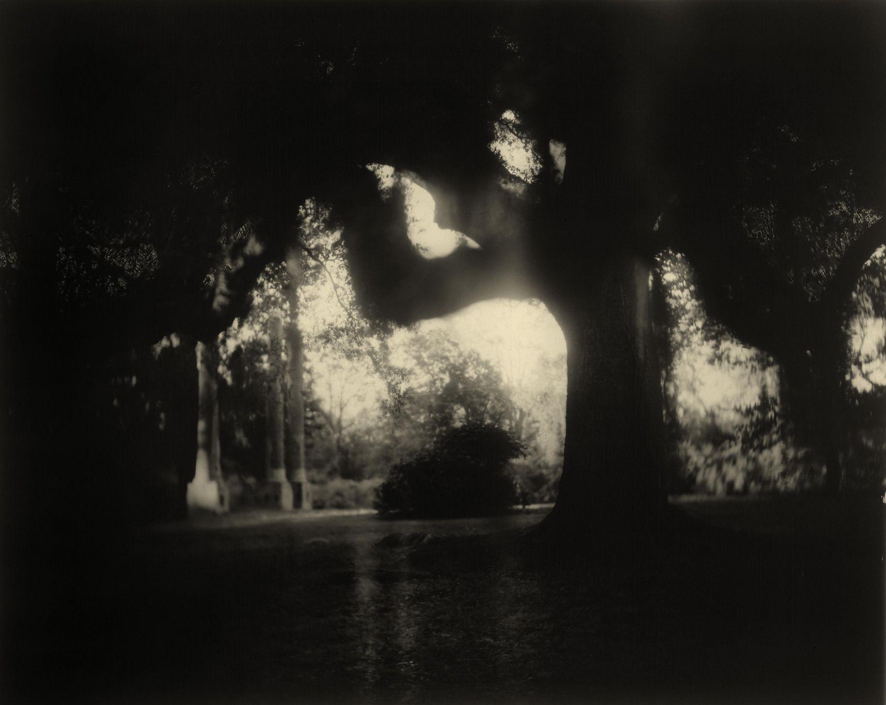 sally mann Deep South, Untitled (Scrim) (Deep South #04, Scritchy Moss Tree Columns)