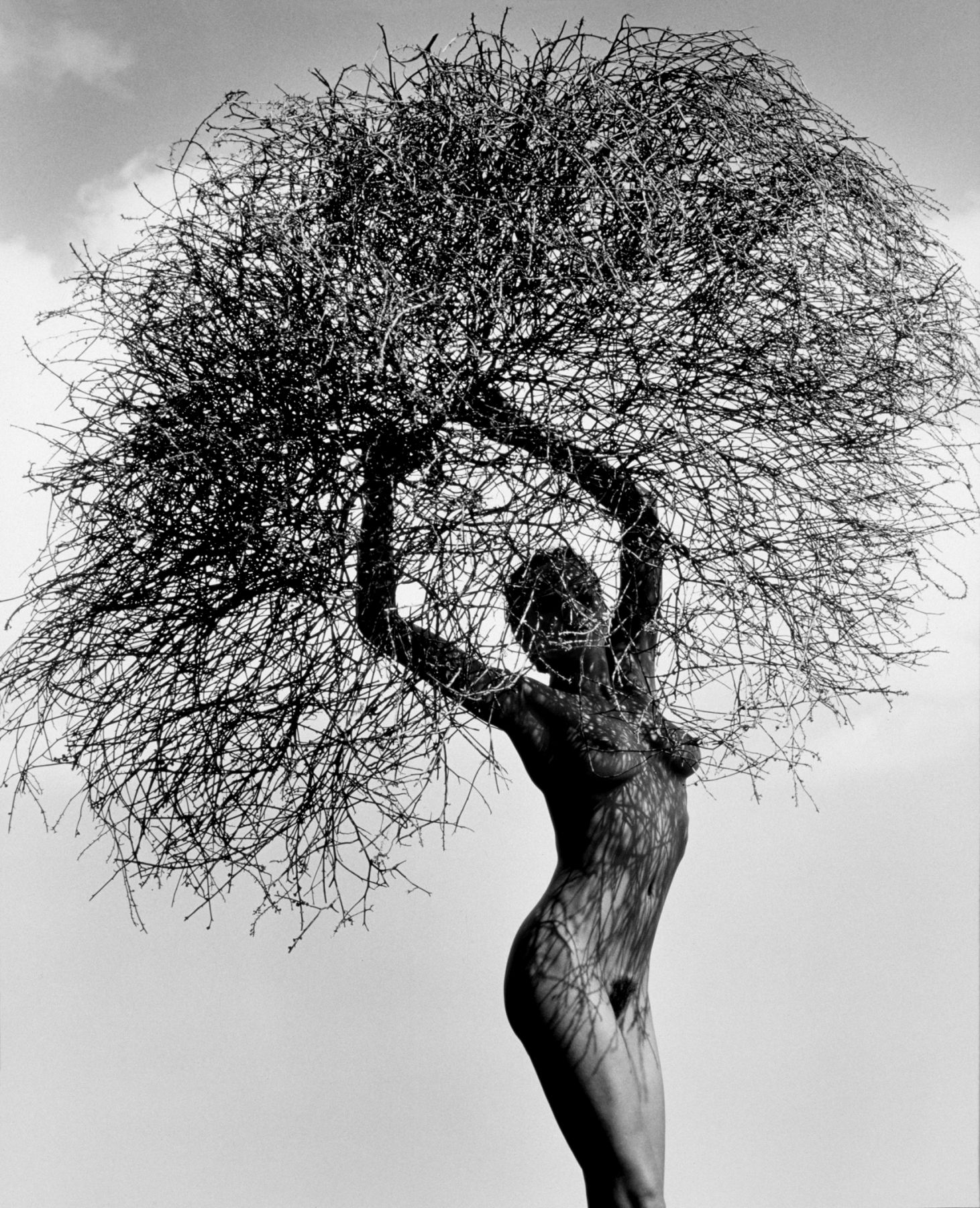 herb ritts neith with tumbleweed paradise cove