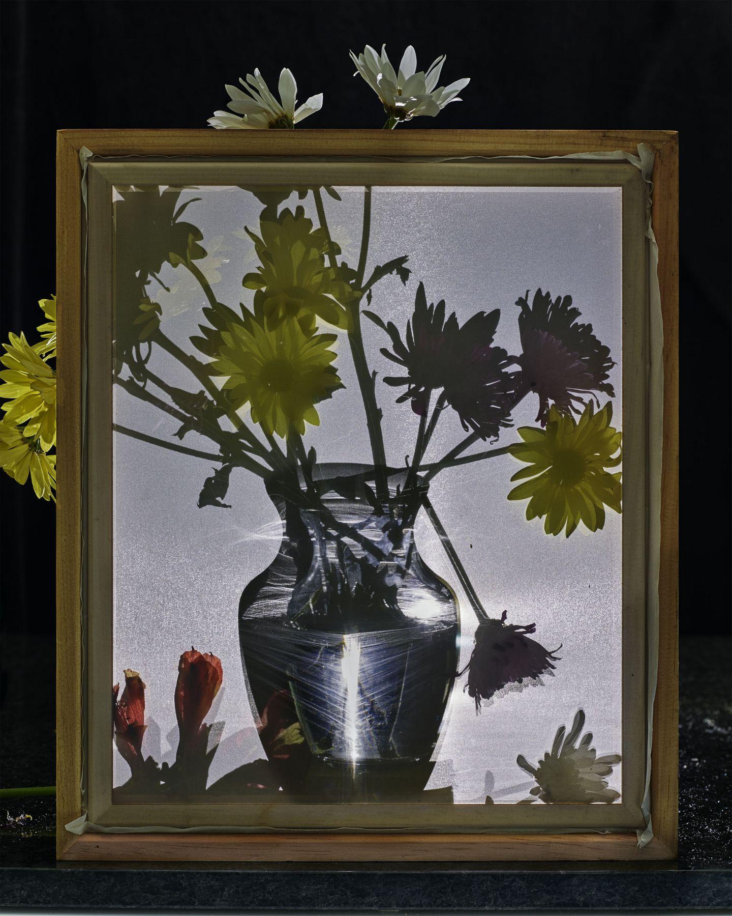 abelardo morell Flowers for Lisa #19, 2016