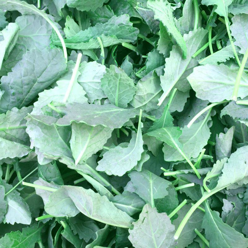 Bay Tuscan Kale (Cavolo Nero)