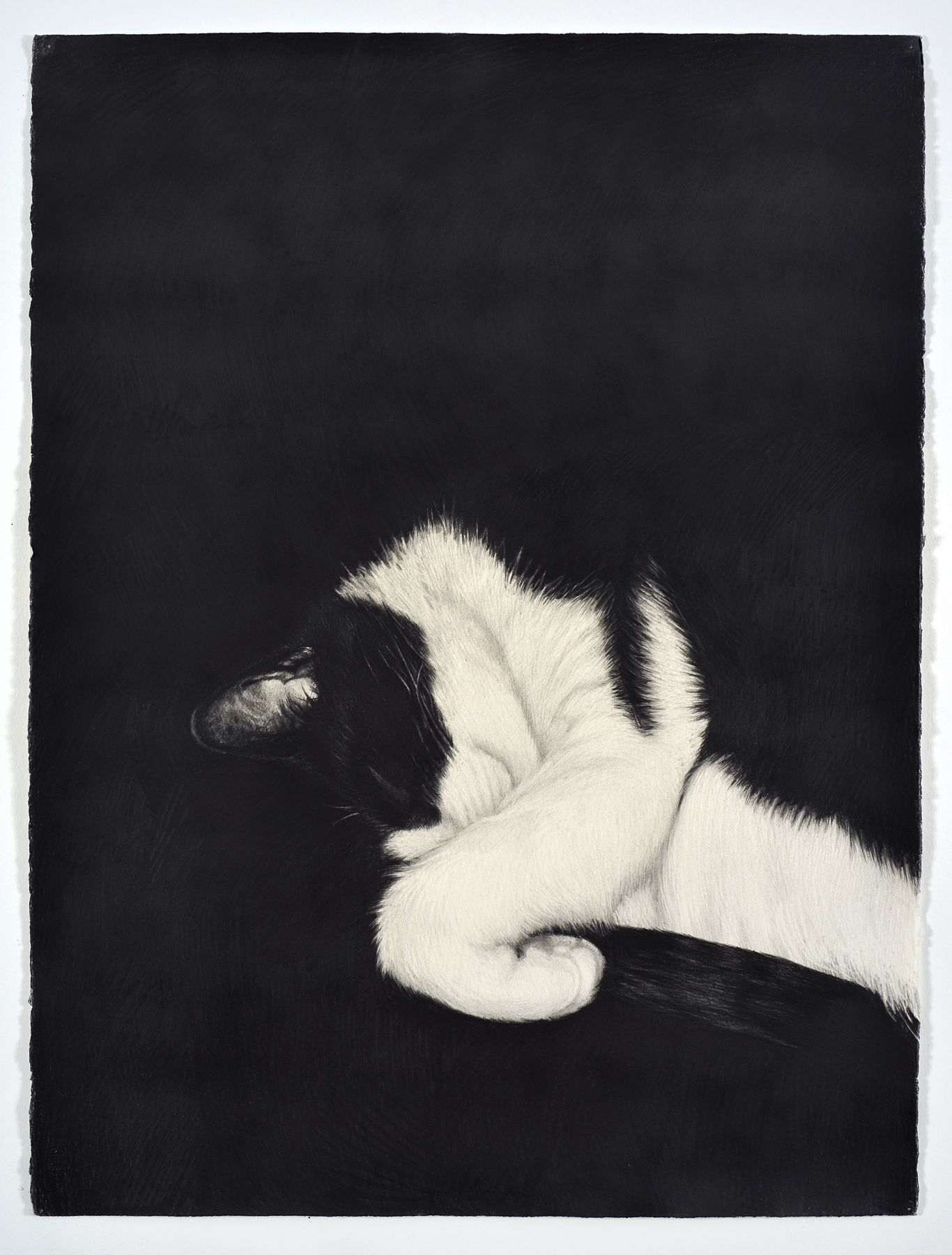 KARL HAENDEL Cat