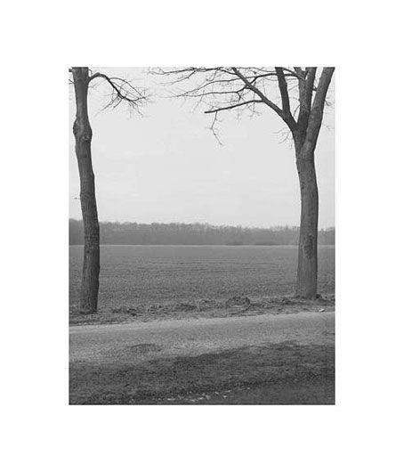 MICHAEL SCHMIDT Untitled (Landscape)