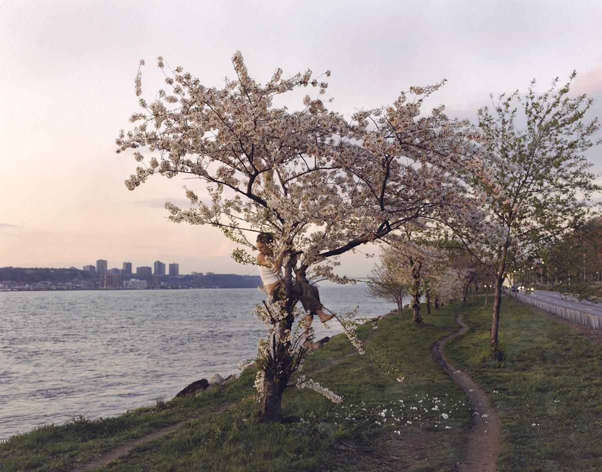 JUSTINE KURLAND Pink Tree